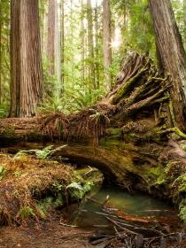 Soñar que un árbol se cae: no pierdas el equilibrio