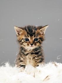 Soñar con gatos de colores: elimina la negatividad