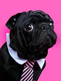 Soñar con un perro negro: recupera el optimismo