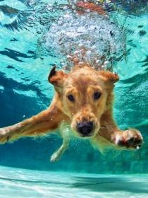 9 consejos vitales para que tu perro no sufra en verano