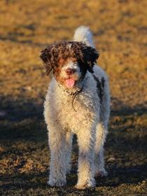 20 nombres para perros de agua muy originales