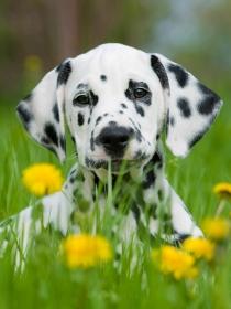 Los mejores nombres para perros con manchas