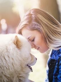 Originales nombres asiáticos para perros y su significado