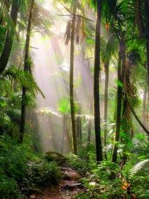 Soñar que vives en una selva: ¡a por todas!