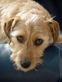 Adorables nombres para perros sin raza o mestizos