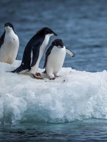 Soñar con pingüinos: acepta tus contradicciones
