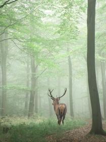 Soñar con ciervos: momentos de abundancia
