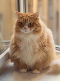 Ailurofobia: ¿tienes miedo a los gatos?