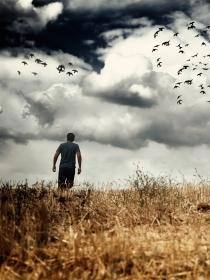 Ornitofobia: ¿tienes miedo a los pájaros?