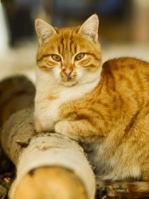 Soñar con gatos que te atacan: protégete de los falsos amigos