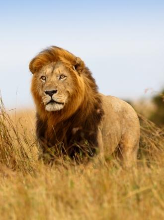Significado de sueños con leones