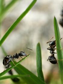 El peligro de soñar con hormigas