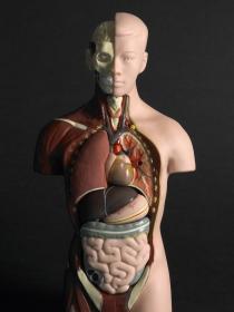 Donante de órganos: regala una vida