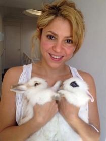 El significado de soñar con conejos: amor y familia en juego