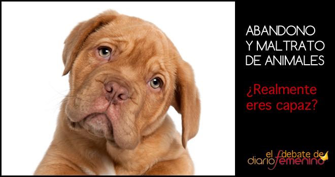 Abandono y maltrato de animales: ¿realmente eres capaz?