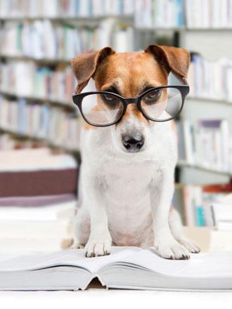 ¿Mascotas o humanos? Fotos y gifs divertidos de perros y gatos