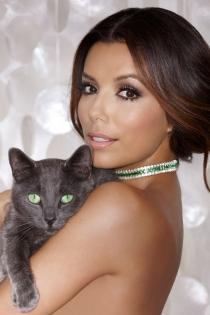 Mascotas famosos: Eva Longoria, un gato de anuncio