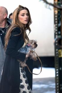 Perros de famosos: Boo y Pistol, los perros de Amber Heard y Johnny Depp