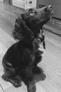 Perros de famosos: Olive, el perro de los Beckham