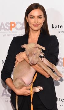 Perros de famosos: Irina Shayk, defensora de los animales