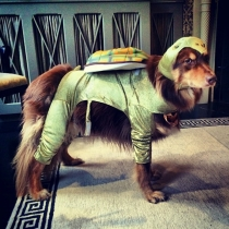 Disfraces perros: La mascota de Amanda Seyfried