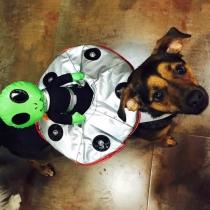 Disfraces perros: La mascota de Miley Cyrus