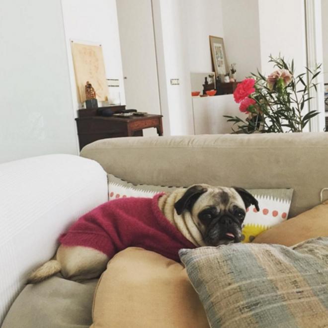 Perros de famosos: Mila, el ojito derecho de Tania Llasera