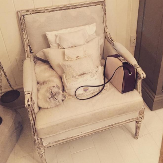 La gata de Taylor Swift, plácidamente tumbada