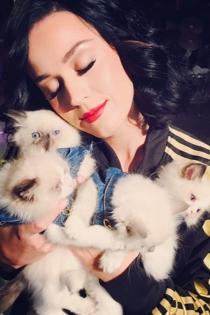 Katy Perry, muy dulce con sus gatitos
