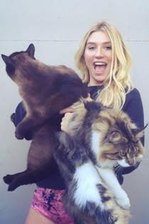 Kesha, ¡arriba los gatos!