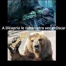 Memes Oscars 2016: Leonardo DiCaprio y el oso