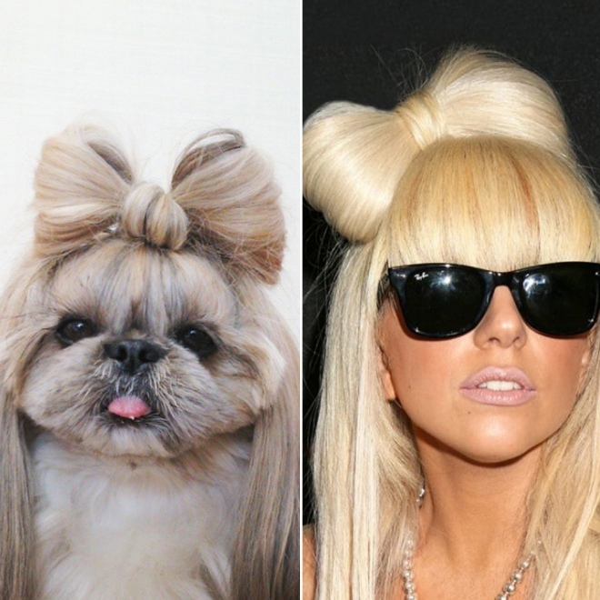 Peinados para perros inspirados en famosas lady gaga - Peinados de famosos ...