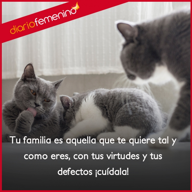 Frases Para La Familia Cuida De Los Tuyos