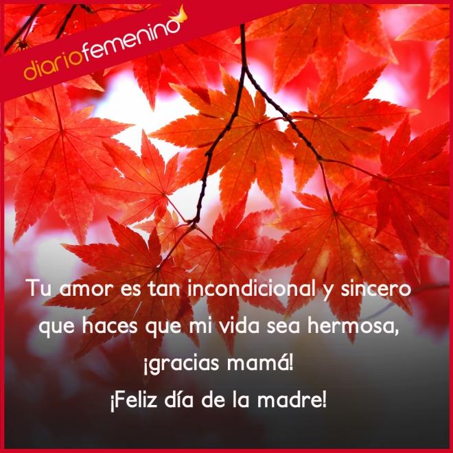 Frases De Amor Para El Dia De La Madre Gracias Mama