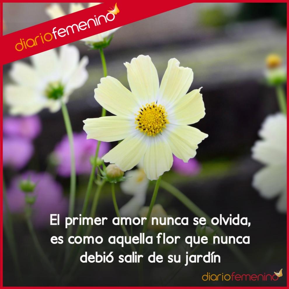 Frases De Amor: La Flor Del Primer Romance