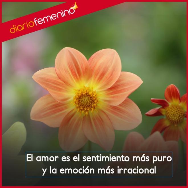 Frases De Amor El Sentimiento Mas Puro E Irracional