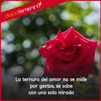 Frases de amor románticas: la ternura y la belleza del amor