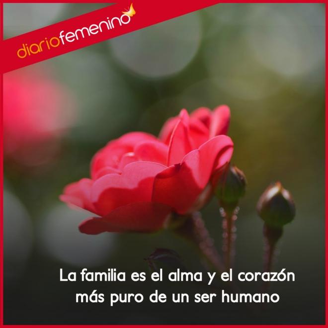 Frase De Amor Para La Familia Son El Corazon Y El Alma Del Ser Humano