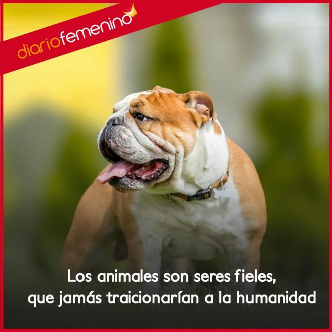 Frases De Amor Y Respeto Para Los Animales
