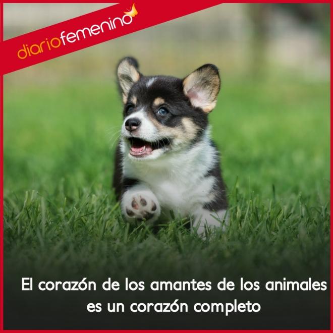 Frases De Amor Para Dedicar A Los Animales