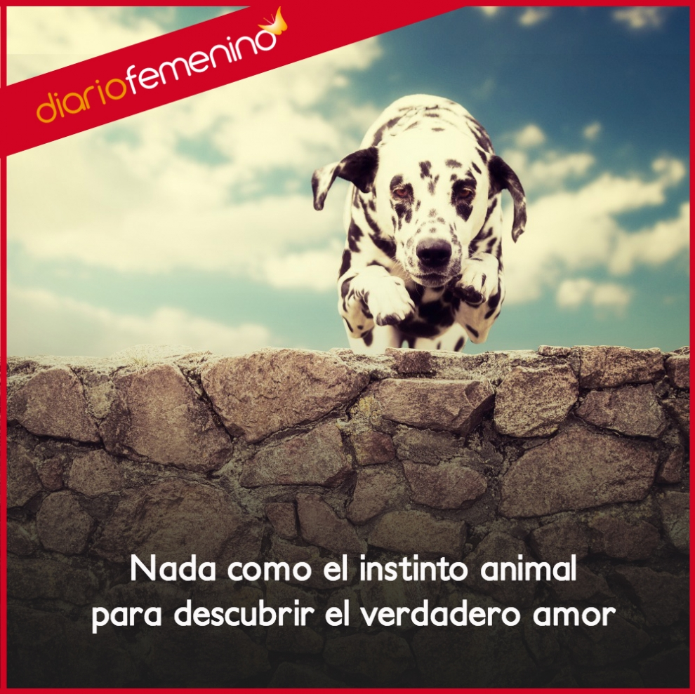 Frases Sobre Amor Animal