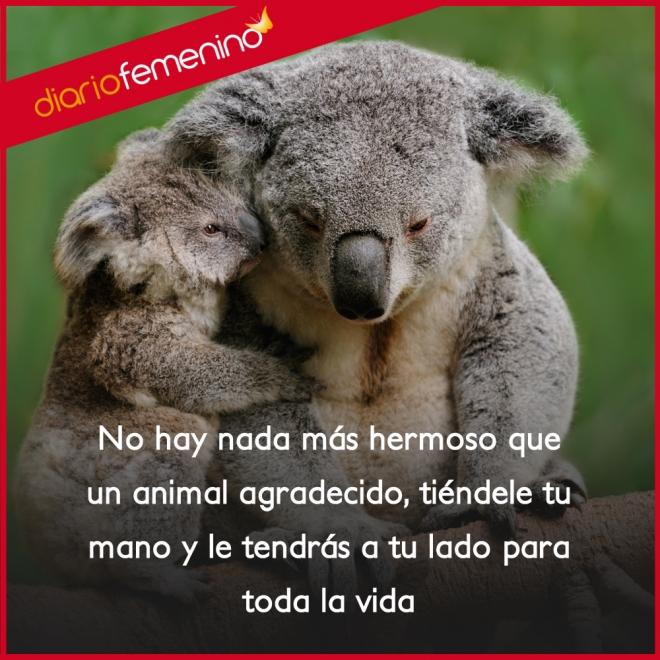 Frases De Amor Sobre Animales Siempre Agradecidos