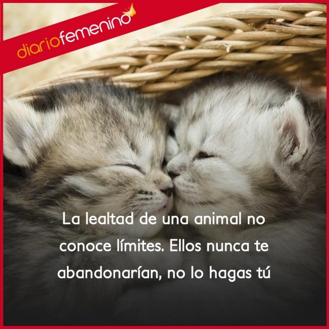 Frases De Amor Sobre Animales No Los Abandones