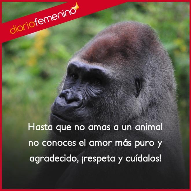 Frases De Amor Sobre Los Animales Respetalos