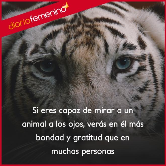 Frases De Amor Sobre Los Animales Son Pura Bondad Y Gratitud
