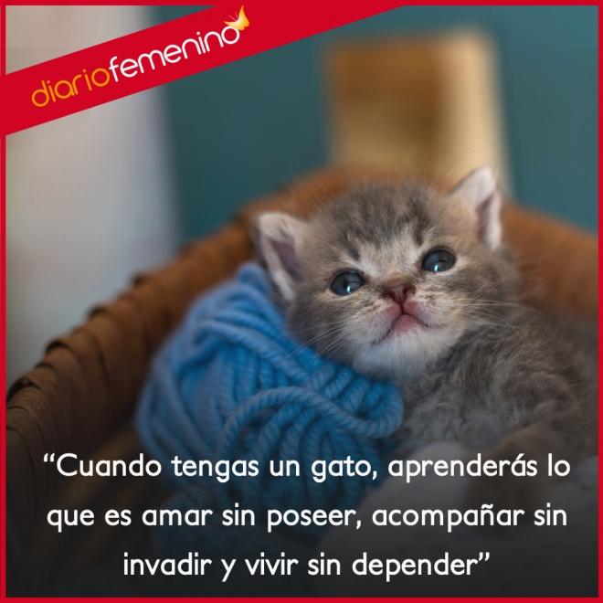 Frases Para Amar A Los Gatos Amar Sin Poseer