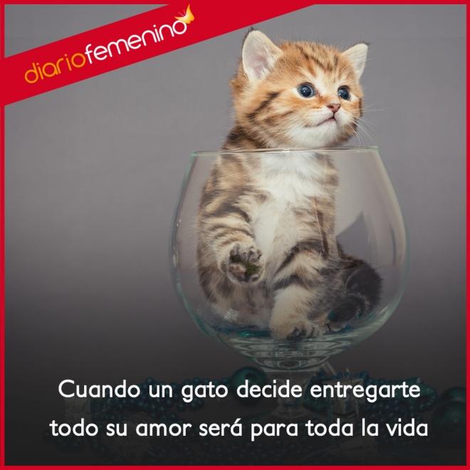 Frases Para Amar A Los Gatos Amor Para Toda La Vida