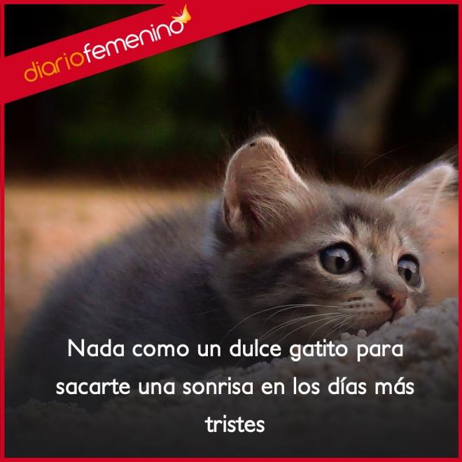 Frases Para Amar A Los Gatos Te Sacan Sonrisas