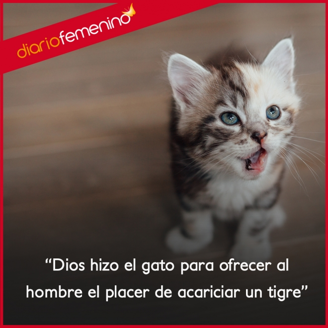 Frases Para Amar A Los Gatos Es Como Acariciar A Un Tigre