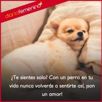 Frases para amar a los perros: ¡son un amor!
